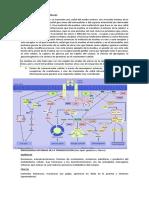 fisiologia transduccion