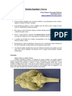 medula_nervos.pdf