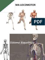 Sistema Esqueletico (1)