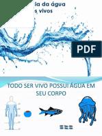 A Importância Da Água Para Os Seres Vivos