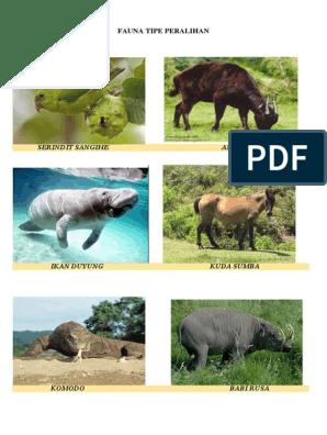 90+ Gambar Fauna Tipe Oriental Gratis Terbaru