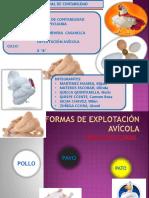 EXPLOTACIÓN AVÍCOLA 2.pptx