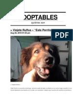 Adoptables Boletín  29-08-10 >> perros y gatos en adopción