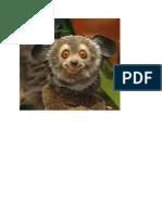 lemur9
