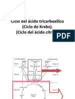 Ciclo de Krebs - Via de Las Pentosas - CTE 2017