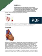Circulación sanguínea.docx