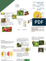 Triptico - Frutos y Semillas