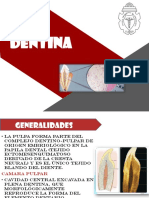 Expo Dentinogenesis [Autoguardado]