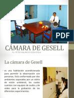 Cámara de Gesell Leon Oyola