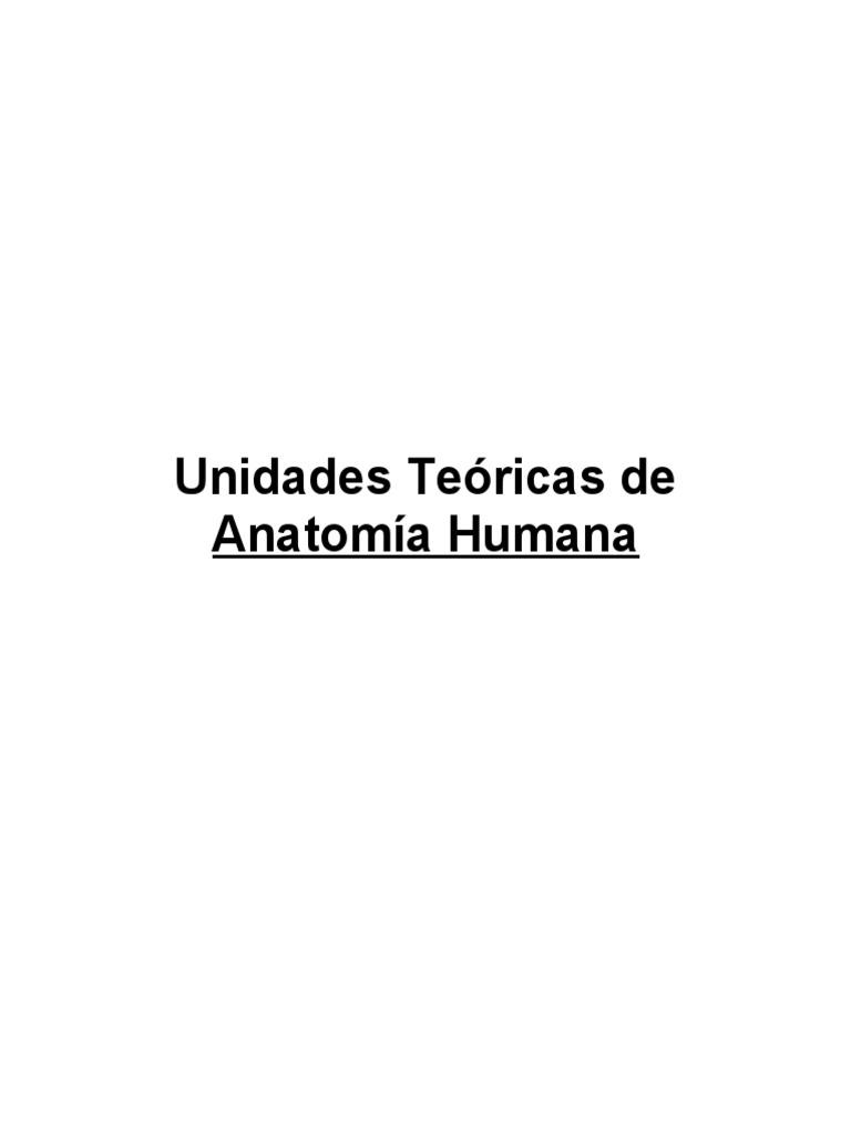 Resumen Para Examen de Anatomía