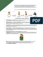 Informe de Ciencias Naturales Cadena Alimenticia