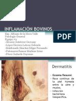 INFLAMACIÓN-BOVINOS (1)
