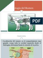 Fisiología Del Rumen