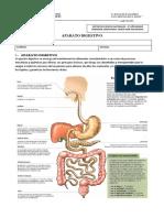 Guía Sistema Digestivo2- 8° Básico