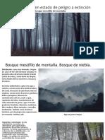 Ecosistema en estado de peligro a extinción.pptx