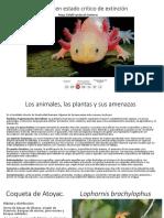 Especies en peligro critico de extinción en méxico .pptx