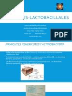 Firmecurtes-lactobacillus