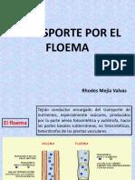 Movimiento Floematico Sem 03
