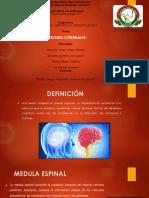 lesiones-cerebrales