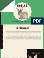 Coelho Anatomia