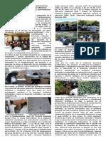 Articulo Periodico Franciscano