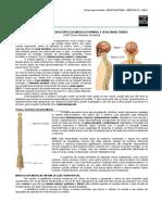 Anatomia Macroscopica Da Medula Espinhal