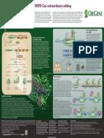 CRISPR–Cas extraordinary editing.pdf