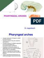 21 - Pharyngeal Arches (HD)