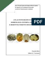 Atlas Fotográfico Da Morfologia Externa Geral