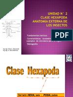 Clase Hexápoda Anatomía Externa de Los Insectos