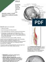 regiune cerebrala anterioara