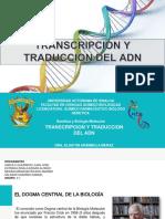 TRANSCRIPCION-Y-TRADUCCION-DEL-ADN.pptx