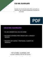 Presentacion Bioquimica Ciclo Glioxilato