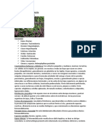 informe herbario
