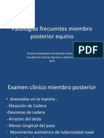 Patologias Frcuentes Miembnro Posterior Equino [169867]