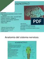 Estudio de anatomía del sistema nervioso