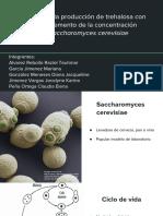 Evaluación de La Producción de Trehalosa en Relación Al Incremento de La Concentración Etanolica en Saccharomyces Cerevisiae (Presentación)