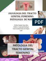 02.-Patologia Del Tracto Genital Femenino y Mama -Teoria