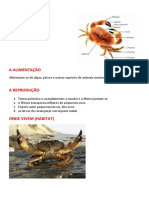 caranguejos2