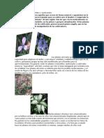 Plantas Silvestres Comestibles y Medicinales