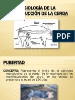 6.- FISIOLOGIA DE LA REPRODUCCION DE LA CERDA.pdf
