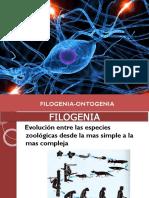 1-Neuroanatomía