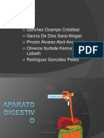 aparatodigestivo-organosyfunciones-120227194211-phpapp01.pdf