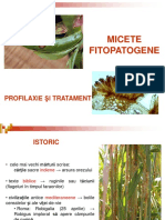 curs_micologie_6_2015.pdf