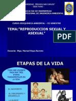 Clases de Reproduccion-1