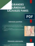 glandulas-1