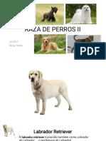 Raza de Perros Parte 2 - Rosly T