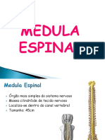 2. Medula Espinal UNIVAG 2017