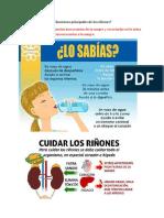 Filtrado Glomerular, Reabsorción y Secreción Tubular