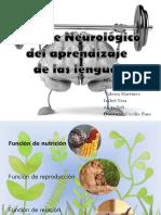 Soporte Neurologico Del Aprendizaje de Las Lenguas [Autoguardado]